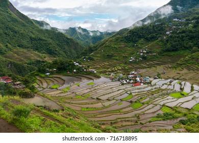 Rice terraced fields, Batad, Philippines
