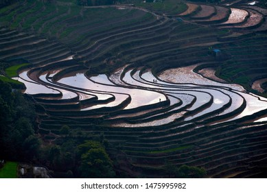 The rice terraces at Bada site in Yuanyang county, China. Bada Rice Terraces cover an area of 950 hectare with over 3700 levels, rising up from 800 meters to 2000 meters