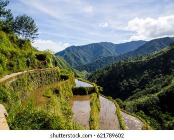 Rice terraces of Batad in Luzon, Philippines