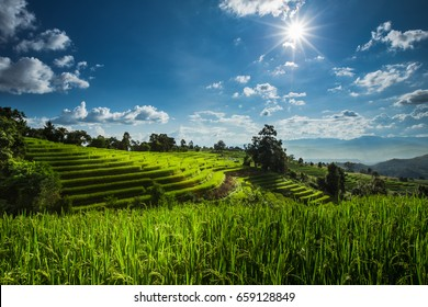 Rice Terraces with blue sky and sunset