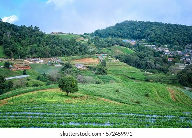 Rice terraces in Chiang mai Thailand