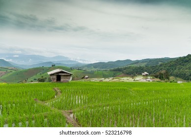 rice terraces in Chiangmai province, Thailand