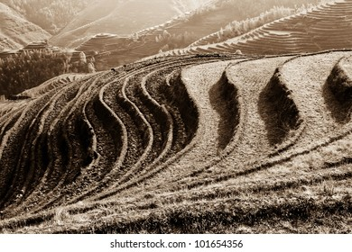 The rice terraces in China