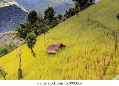 Rice terraces and corn field on mountain in  Nan Province, northern of Thailand.