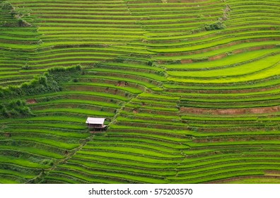 Rice Terraces Field and Agriculture House in Vietnam