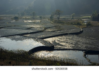 rice terraces filled with water, Burma, Myanmar