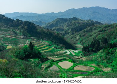 Rice terraces filled with water surrounded by beautiful green mountains,tokamachi city,Niigata Prefecture,japan