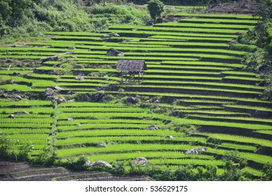 Rice terraces in high mountain in Thailand