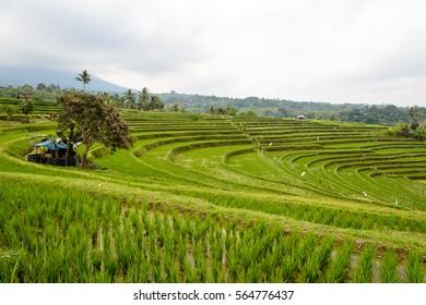 Rice terraces of Jatiluwih, Bali, Indonesia - one of the UNESCO world heritage sites