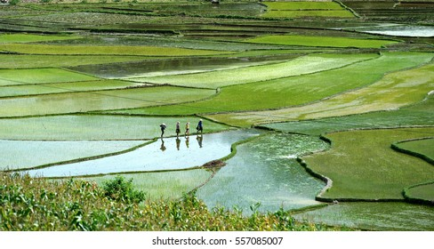 Rice terraces in mountain from north vietnam sapa