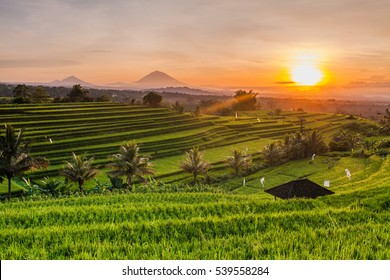 Rice terraces in mountains at sunrise, Bali Indonesia