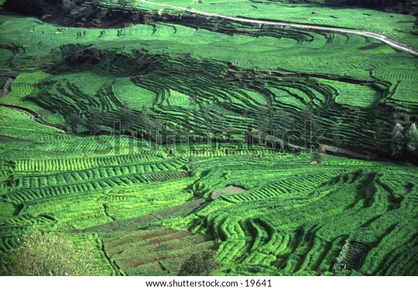 Rice Terraces in Nepal