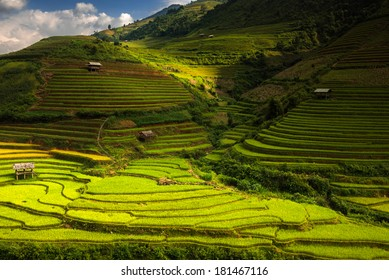 Rice terraces on the mountain.