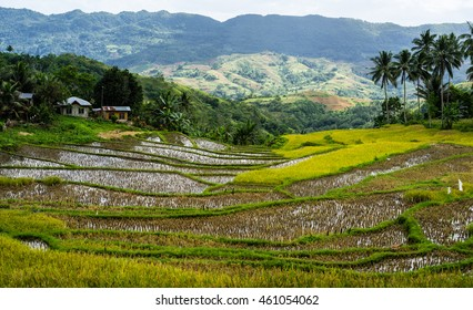 Rice Terraces on Osmena Peak, Cebu Island, the Philippines.