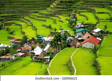 Imágenes Fotos De Stock Y Vectores Sobre Banaue Rice