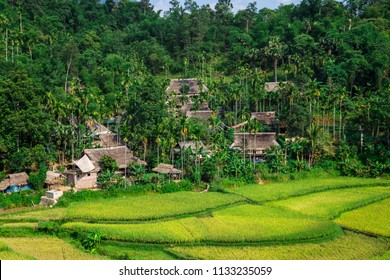 Rice terraces in the Pu Luong Nature Reserve, Thanh Hoa Province, Vietnam. The terraces are farmed by Muong and White Thai ethnic minorities
