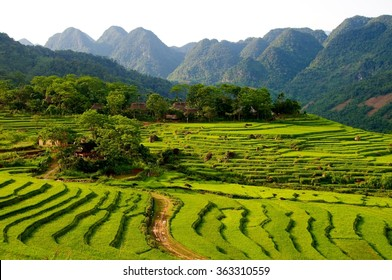 Rice terraces in the Pu Luong Nature Reserve, Thanh Hoa Province, Vietnam. The terraces are farmed by Muong and White Thai ethnic minorities.