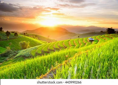 Rice Terraces with sunset backdrop at Ban Papongpieng Chiangmai Thailand