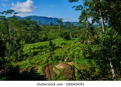 Rice terraces.The traditional houses and fields is in a valley among the mountains. Rice cultivation. Beautiful view of the rice field on the blue sky and white cloud background. Agriculture concept
