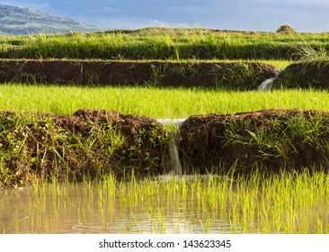 Rice terraces used for irrigating rice plantations. Camarines Sur, Philippines.