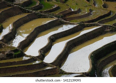 Rice terraces of Yunnan, China. The famous terraced rice fields of Yuanyang in Yunnan province in China. Yunnan, China - November, 2018
