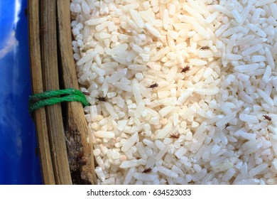 The rice weevil is the insect that destroys the grain.Rice will lose its nutritional value.