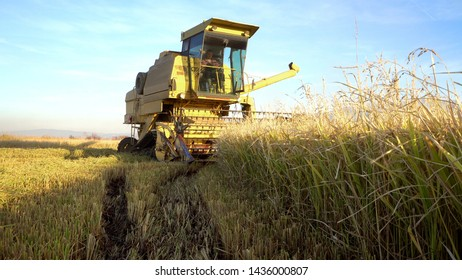 Rice, Wheat harvesting shearers, Combine autumn harvest of the rice and wheat fields