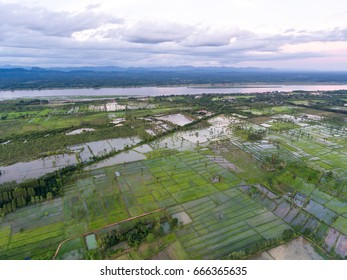 Rice-field high angle view form Drone