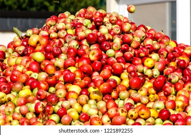 Rich apple harvest. Apple Mountain for making cider and apple juice in Hesse, Germany