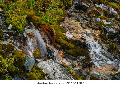 Rich flora of highlands. Red and green mosses, colorful plants, lichens, small waterfall from rock. Spring water on mountainside. Amazing natural background with beautiful vegetation of mountains.