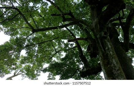 Rich green tree nature