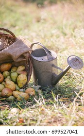 rich harvest. basket with plenty of pear