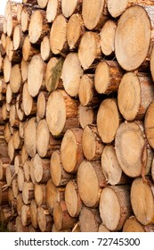 Rich harvest in forest: Cut down and piled logs.