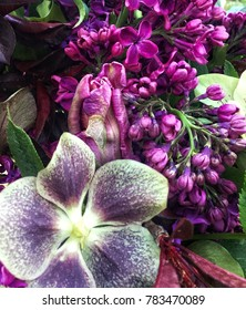 Rich Purple Floral of Hellebore, Lilac, and Tulip