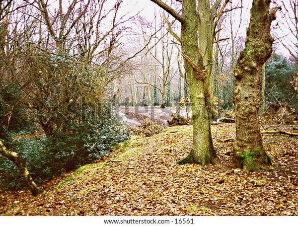 Richmond Park near London, UK, in autumn