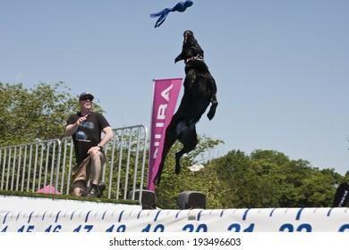 RICHMOND, VA.-May 17:The 6th annual Dominion Riverrock festival, May 17th, 2014, Browns Island and Historic Tredegar. Subaru Ultimate Air Dogs presented by Eukanuba ,  Richmond, Va., May 17, 2014