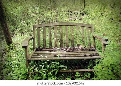 Rickety bench in overgrown park