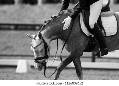 rider on a brown horse, dressage, black and white photo