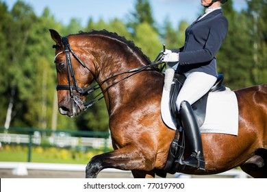 rider on a brown horse, dressage