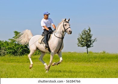 Rider on gray arabian horse in the field