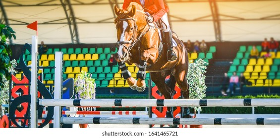 Riderl on sorrel horse in jumping show, equestrian sports. Light-brown horse and sportsman in uniform going to jump. Horizontal web header or banner design.