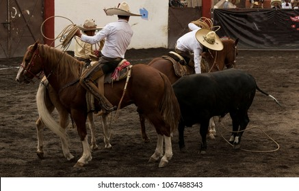 Riders performing rodeo practice