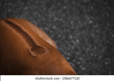 Rücken eines rhodesischen Rätsel auf der Rückseite