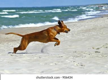 ridgeback jump