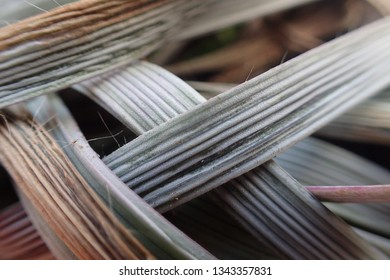 Ridged Grass leaves crossing. Natural texture background