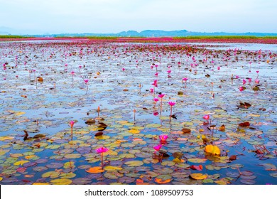 Riding boat over Thale-noi to see lotus field, a famous destination at phatthalung province. Hot summer day at long bridge in Phatthalung province in Thailand. lotus flowers on the large lake.