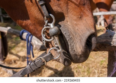 riding domestic horses for recreation and sport