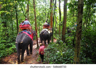 riding elephants in the jungle in thailand