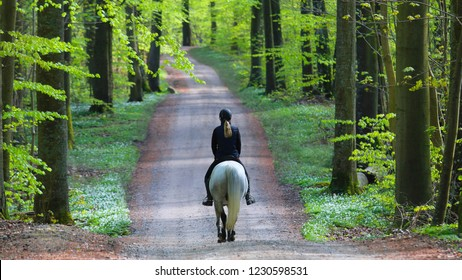 Riding a horse in the forest in spring, Jutland, Denmark.