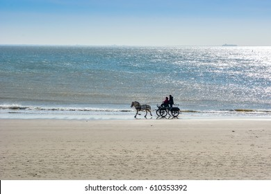 Riding on a sunny beach in horse carriage in Zoutelande, Holland